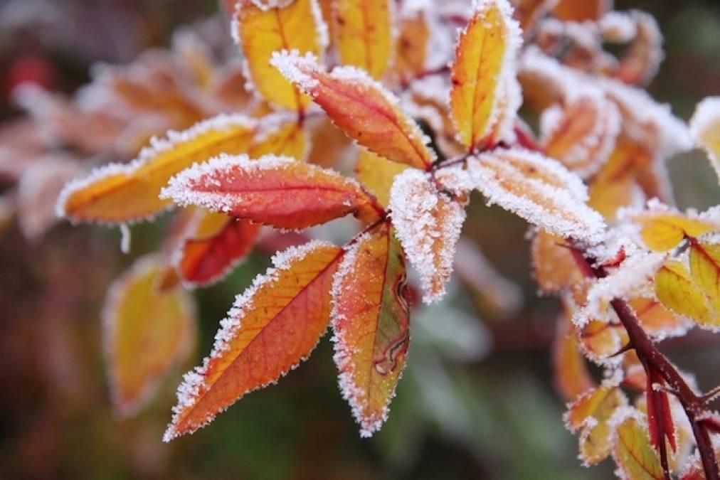 В Тверской области слегка подморозит и выпадет первый снег