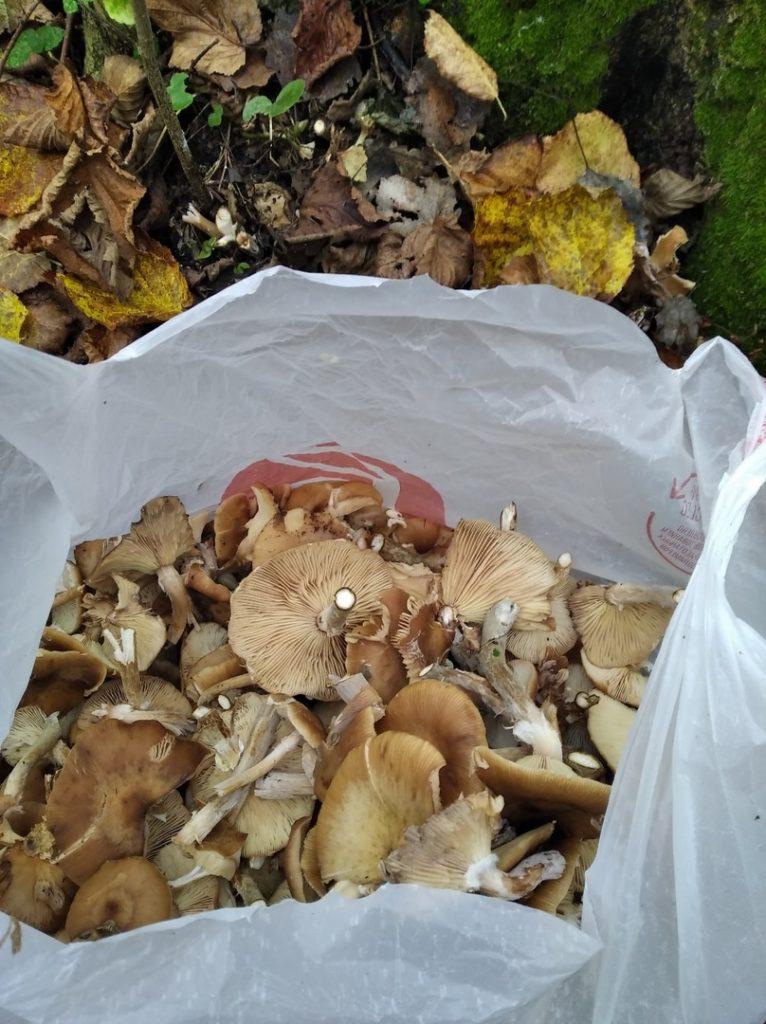 В Тверской области мужчина нашёл 15 килограммов грибов за два часа