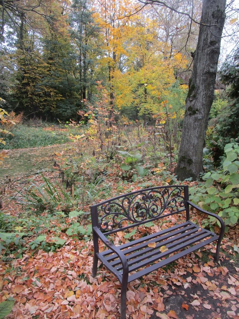 Ботанический сад похвастался фотографиями осенних цветов