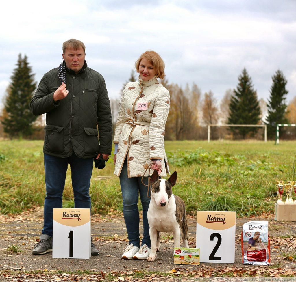 Собачий движ: в Твери прошли выставки собак