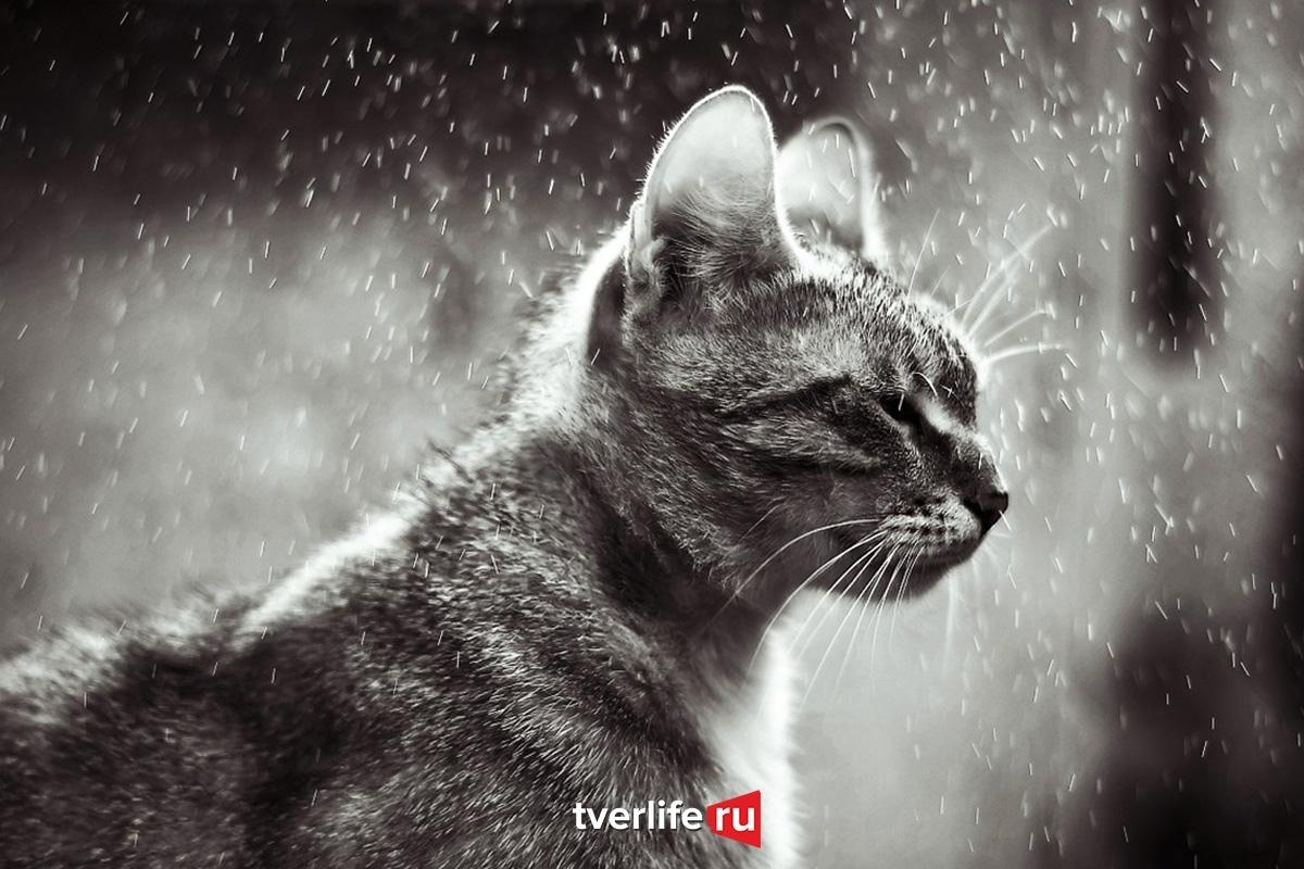 В Тверской области последний день рабочей недели будет дождливым
