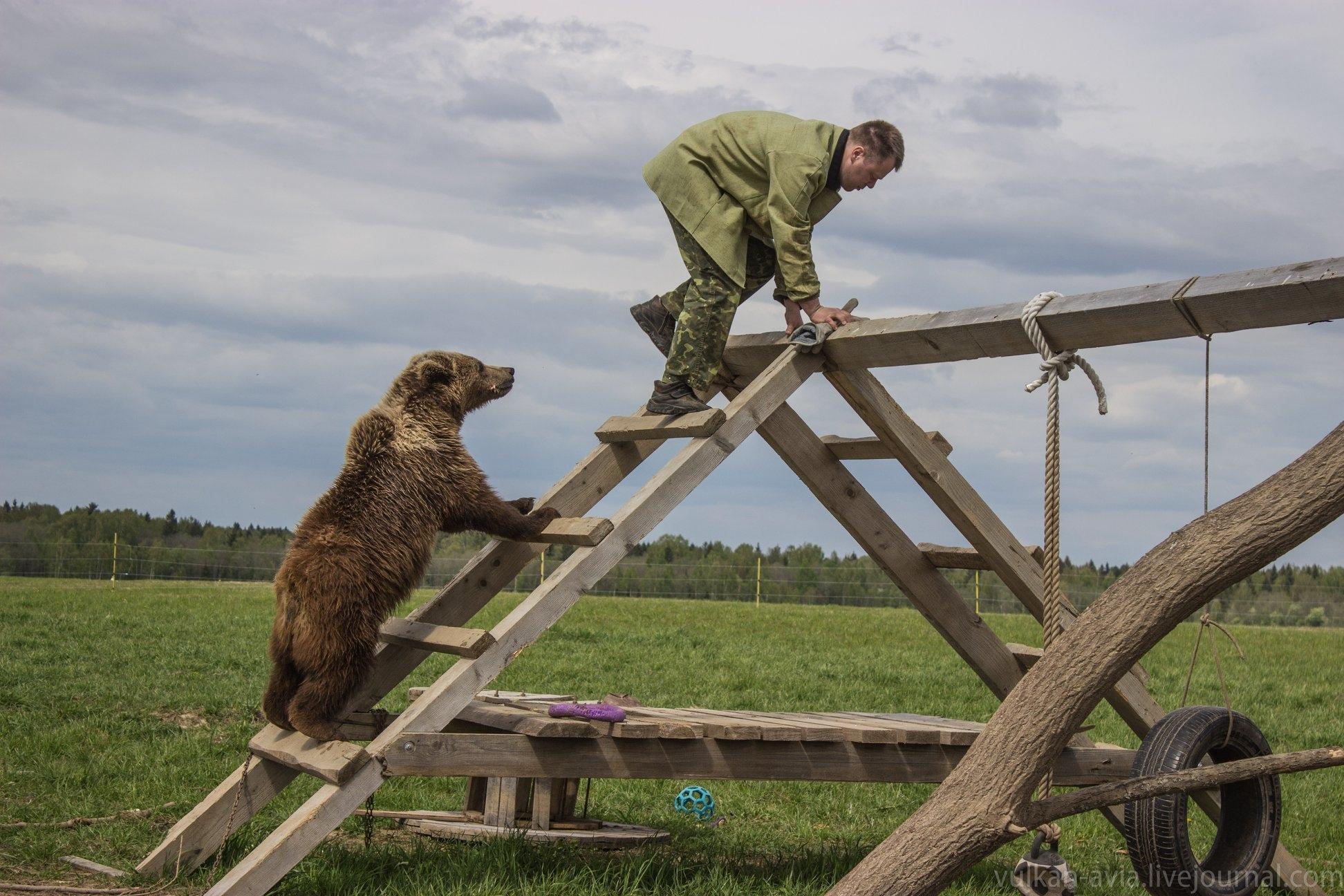 Авиамедведь из Тверской области активно занимается спортом