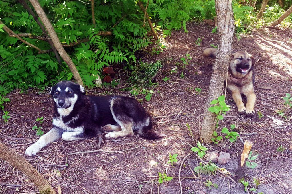 """Собаки научились искать """"закладки"""" и разогнали наркоманов со старинного кладбища в Твери"""