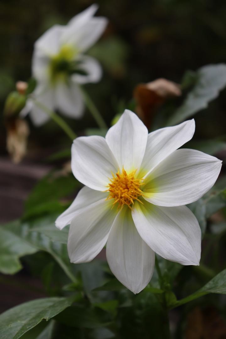 Осенние краски: Ботанический сад Твери делится фотографиями цветов