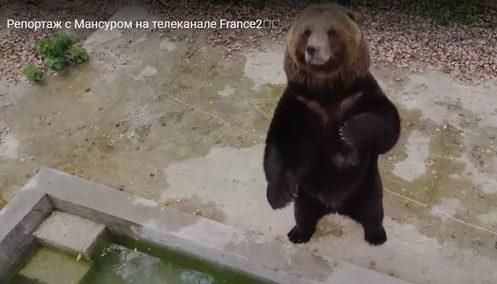 О тверском авиамедведе рассказали на французском телевидении