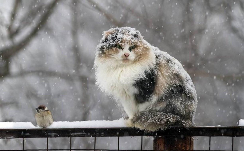Завтра в Тверской области ожидаются мокрый снег и гололедица
