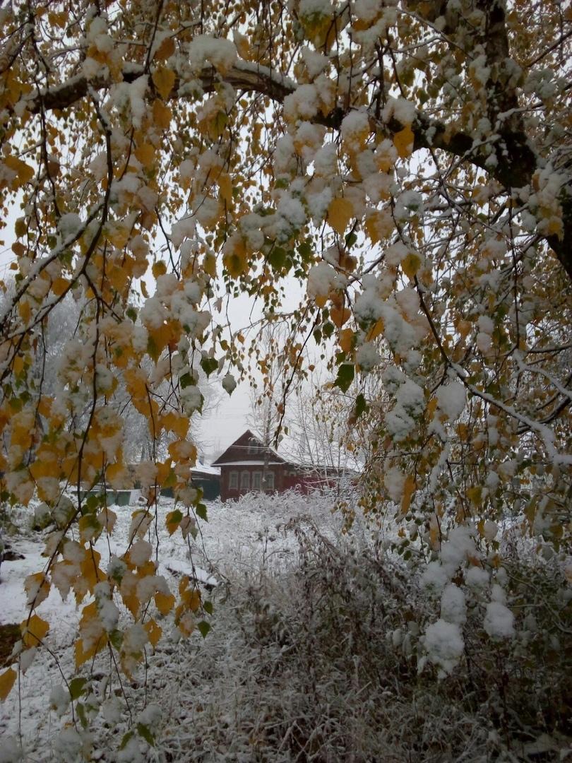 Жители Тверской области делятся фотографиями первого снега