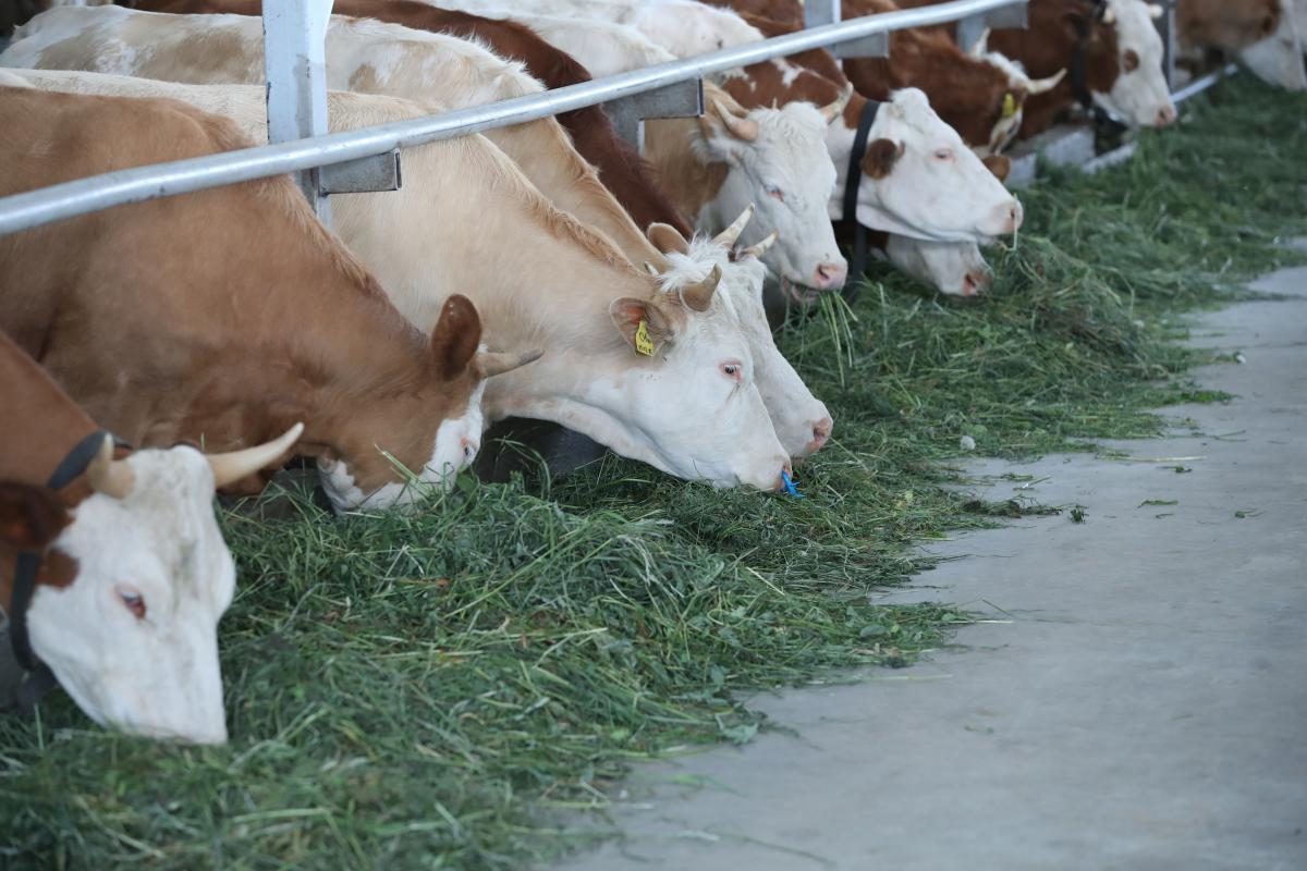 Пять фермерских хозяйств Тверской области получат грантовую поддержку