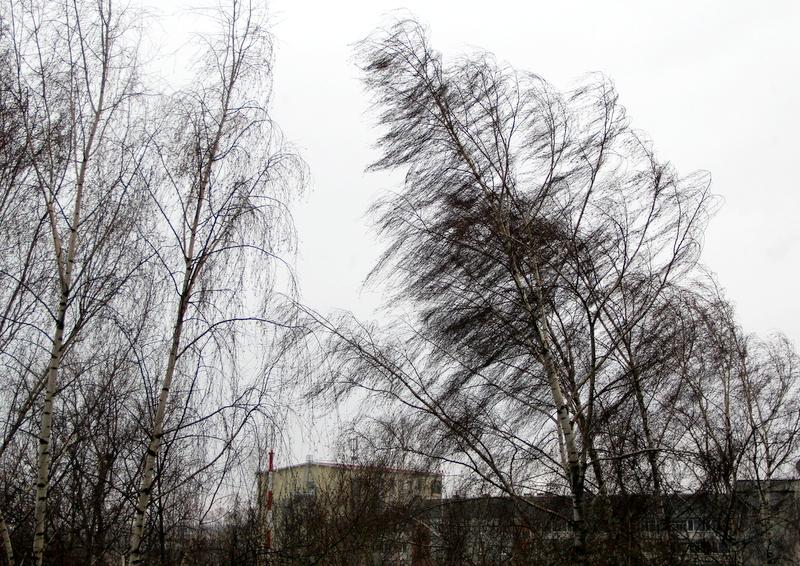 МЧС по Тверской области предупреждает о порывистом ветре