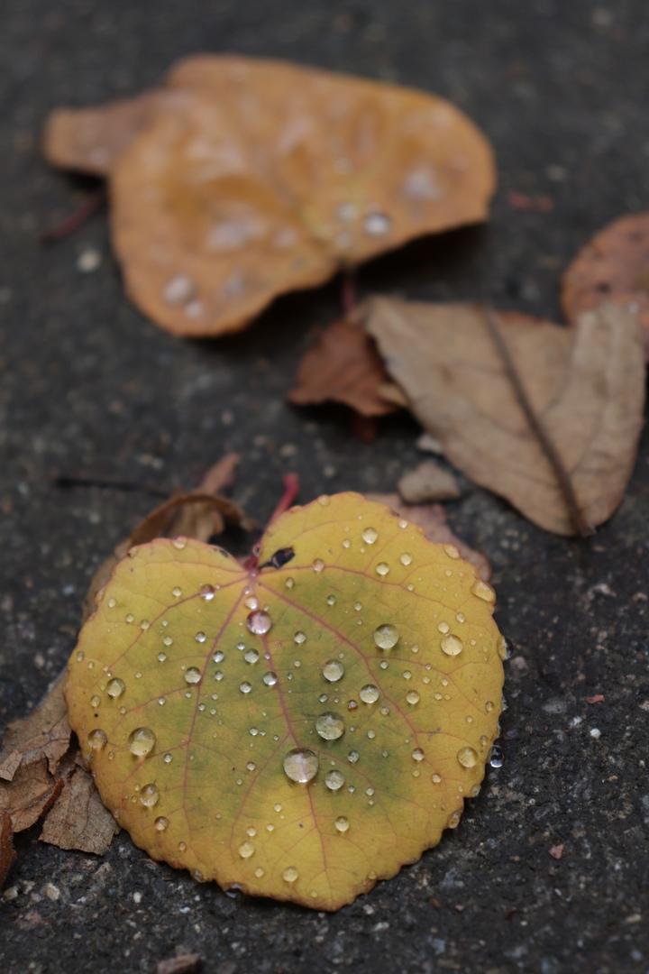Тверской Ботанический сад поделился фотографиями золотой осени