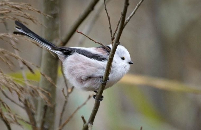 Птиц с необычным названием заметили под Тверью