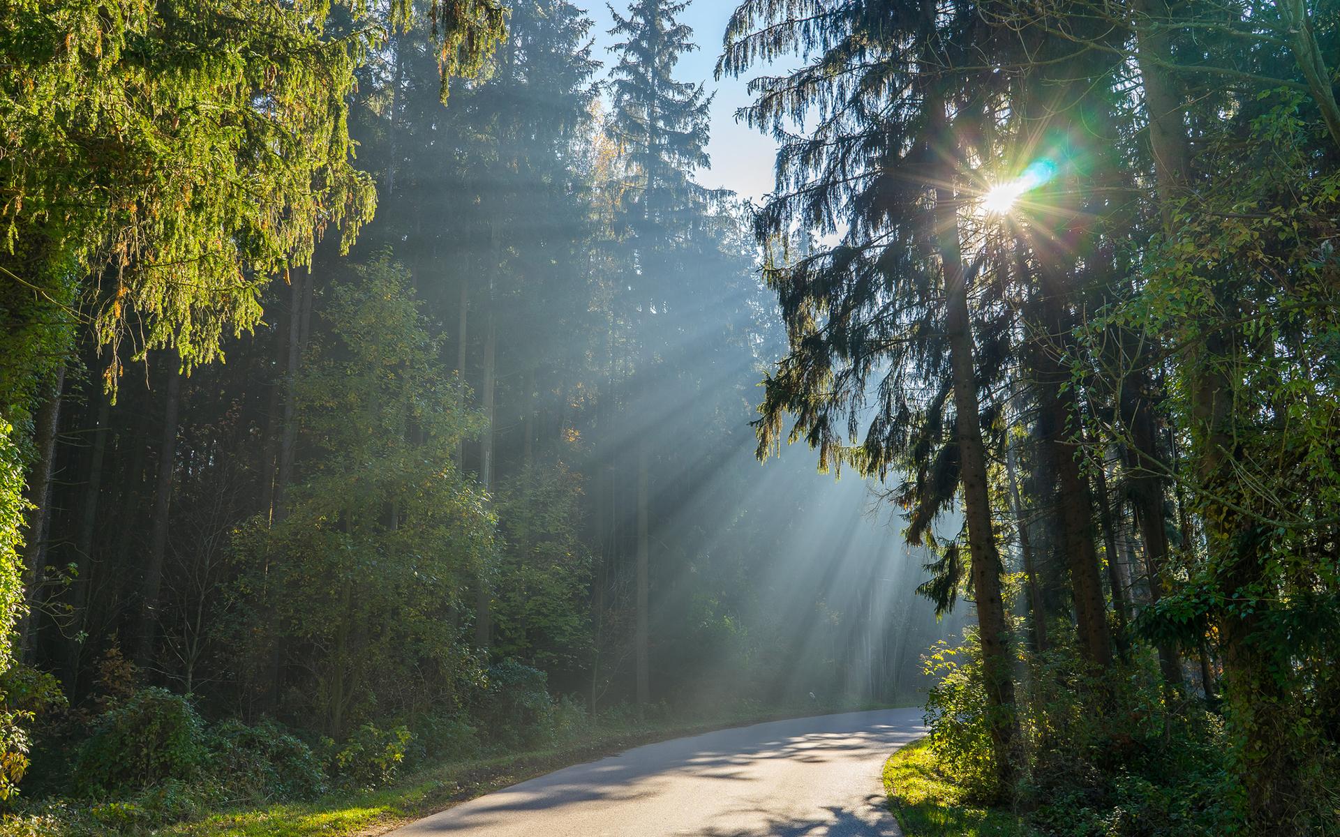 Площадь лесов Тверской области станет больше на 410 гектаров