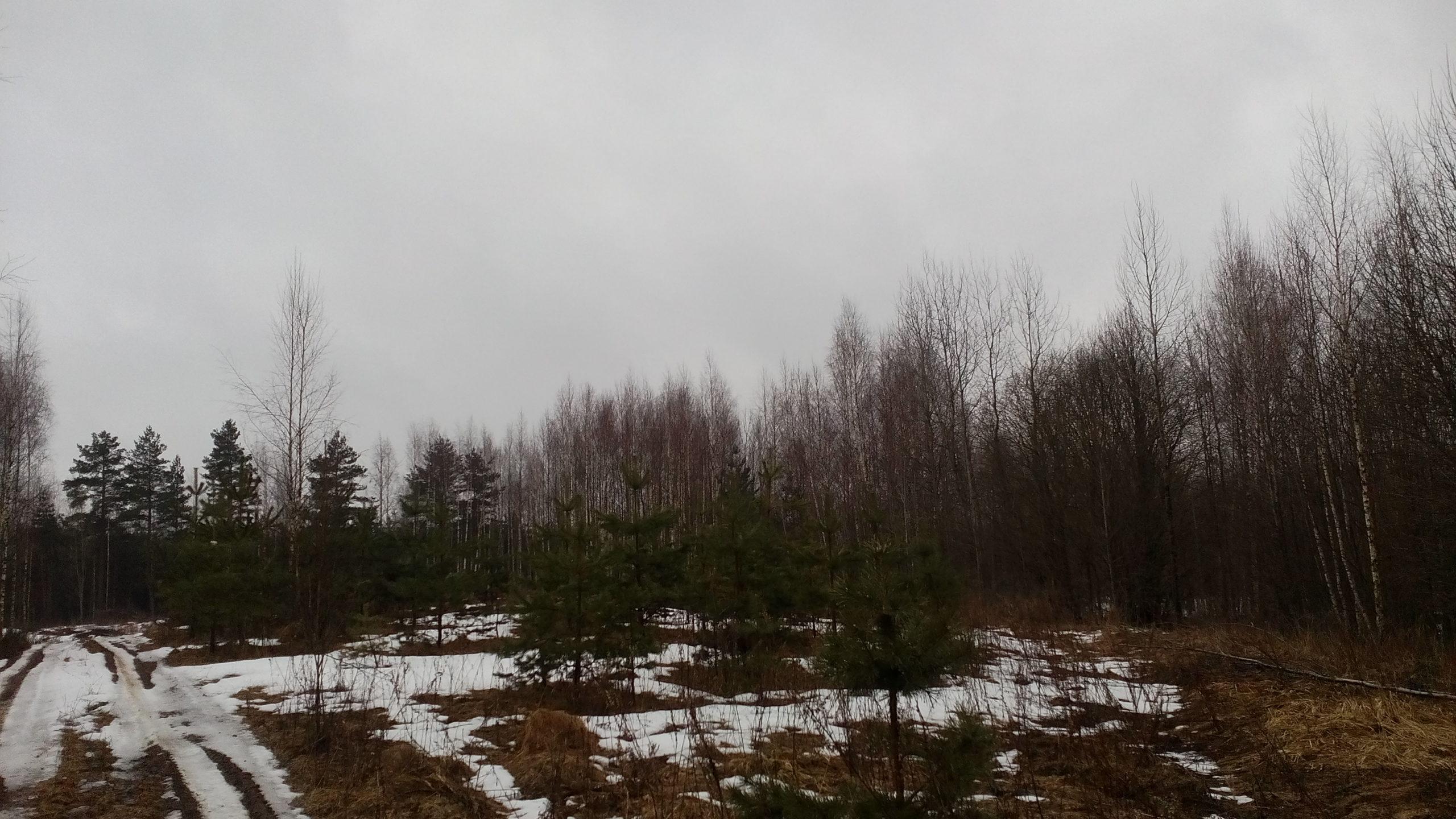 В Бельском районе Тверской области зарастает 160 гектаров сельскохозяйственных угодий