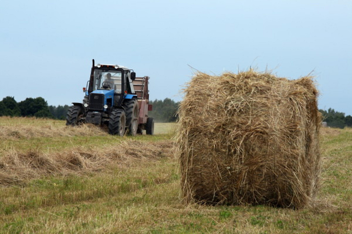 Тверские аграрии завершили уборку урожая и заготовку кормов