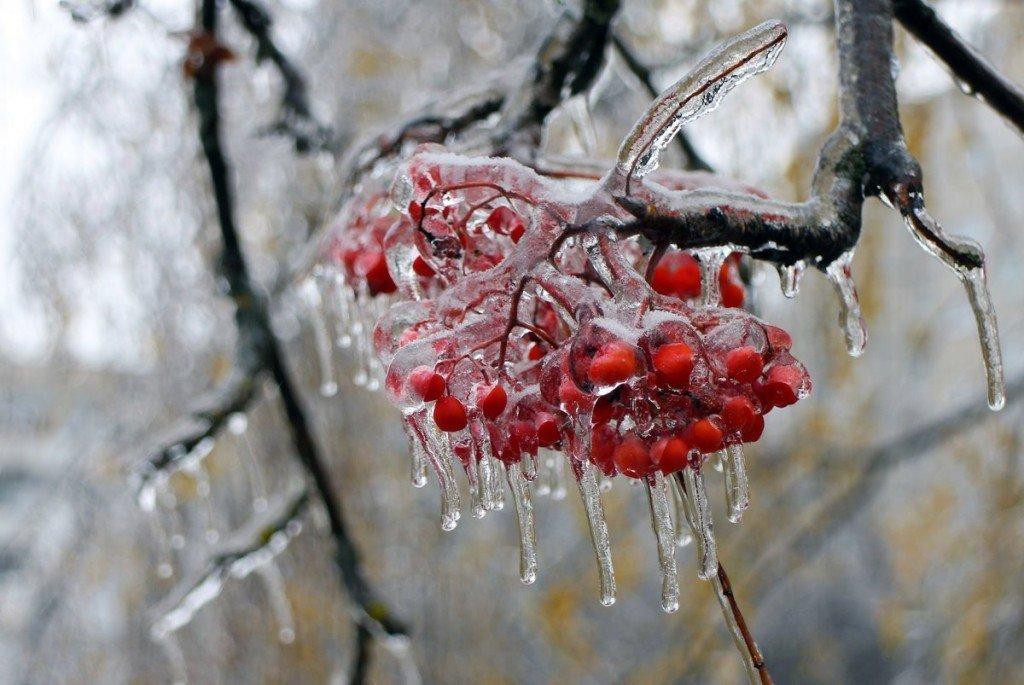 Тверскую область может накрыть ледяной дождь