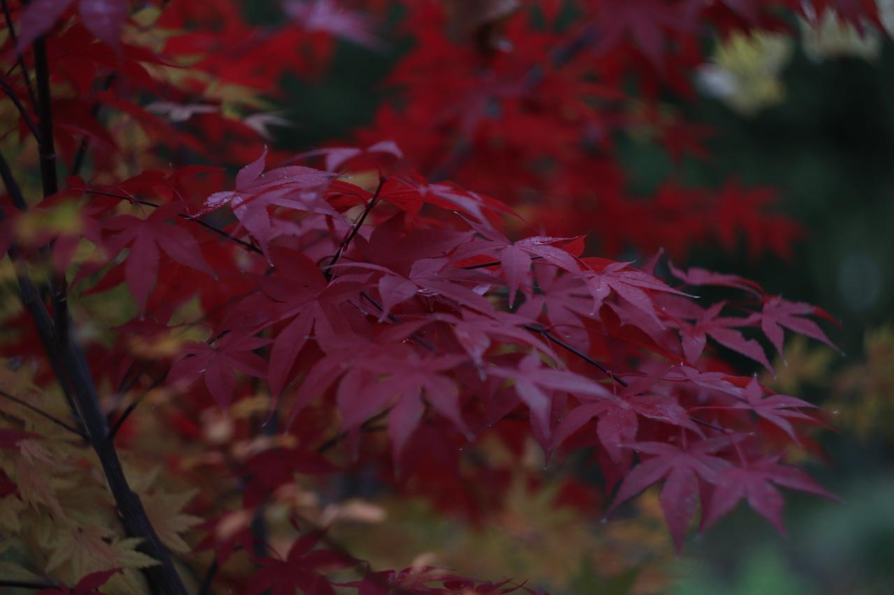В сети появились фото таинственного ноября в тверском Ботаническом саду