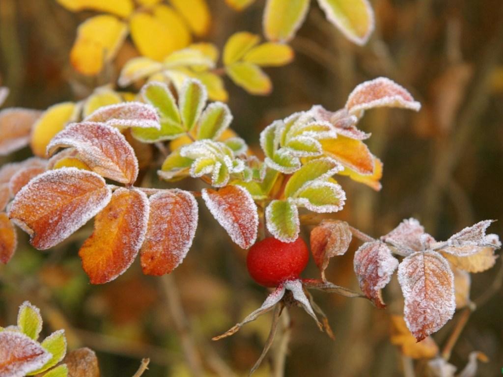 Солнце и легкий морозец ожидаются в выходные в Тверской области