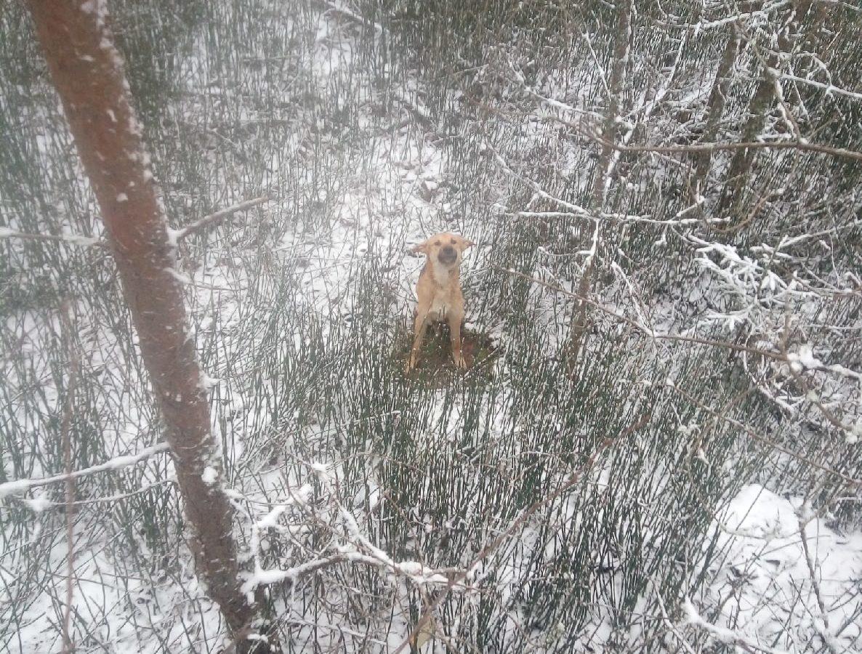 В Тверской области неизвестный связал собаке лапы и бросил умирать