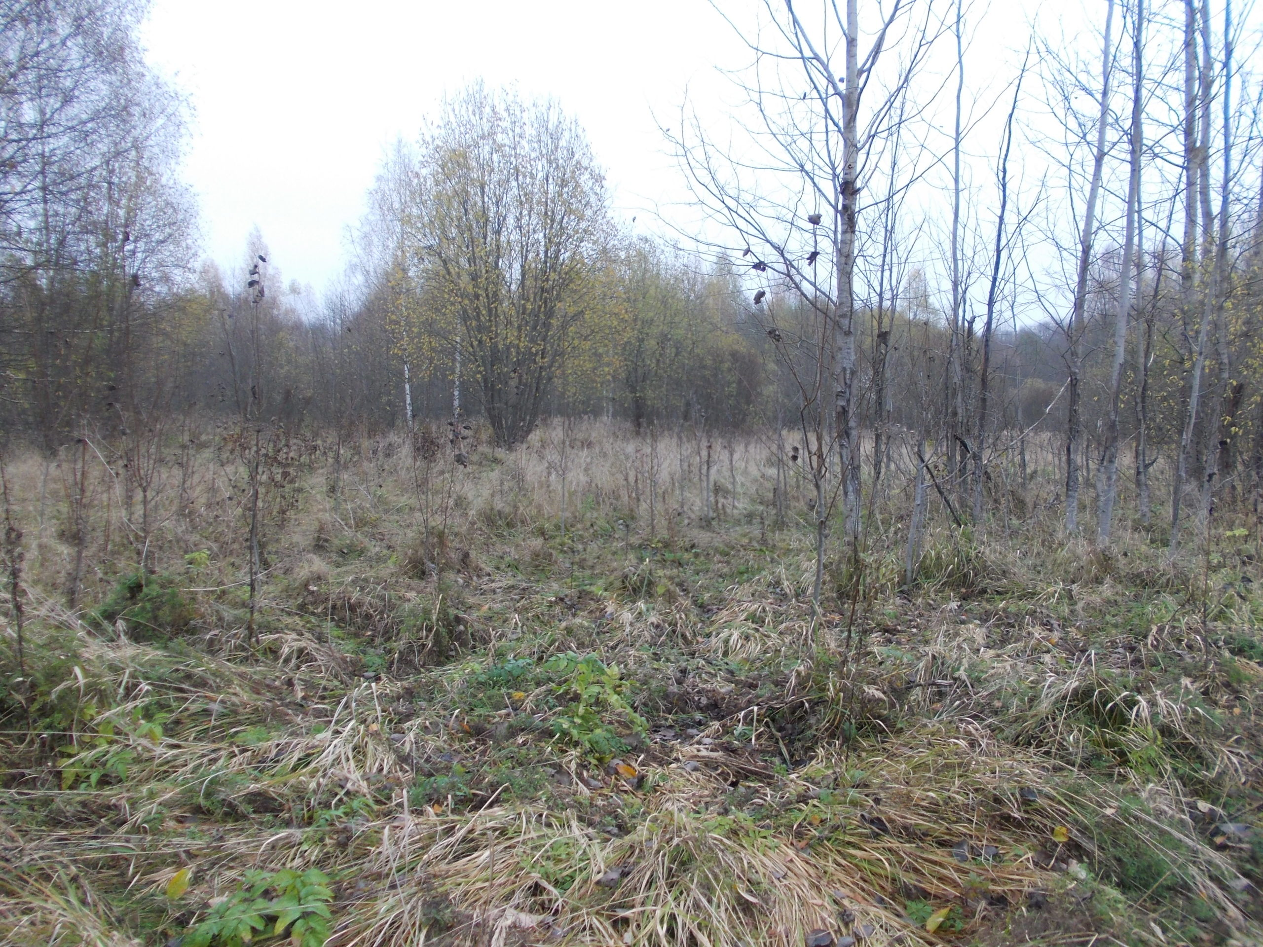 172,9 гектара в Тверской области зарастают бурьяном по вине землевладельца