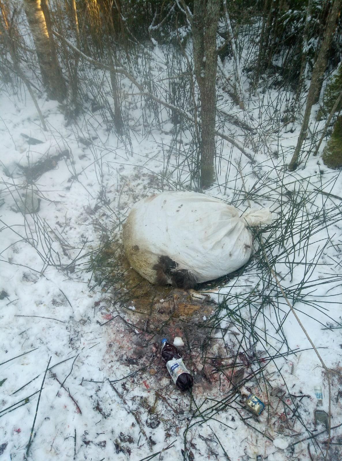 В Тверской области мужчина нашел мешок с отрезанной головой кабана