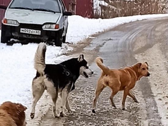 Под Тверью от удара током погибли три собаки
