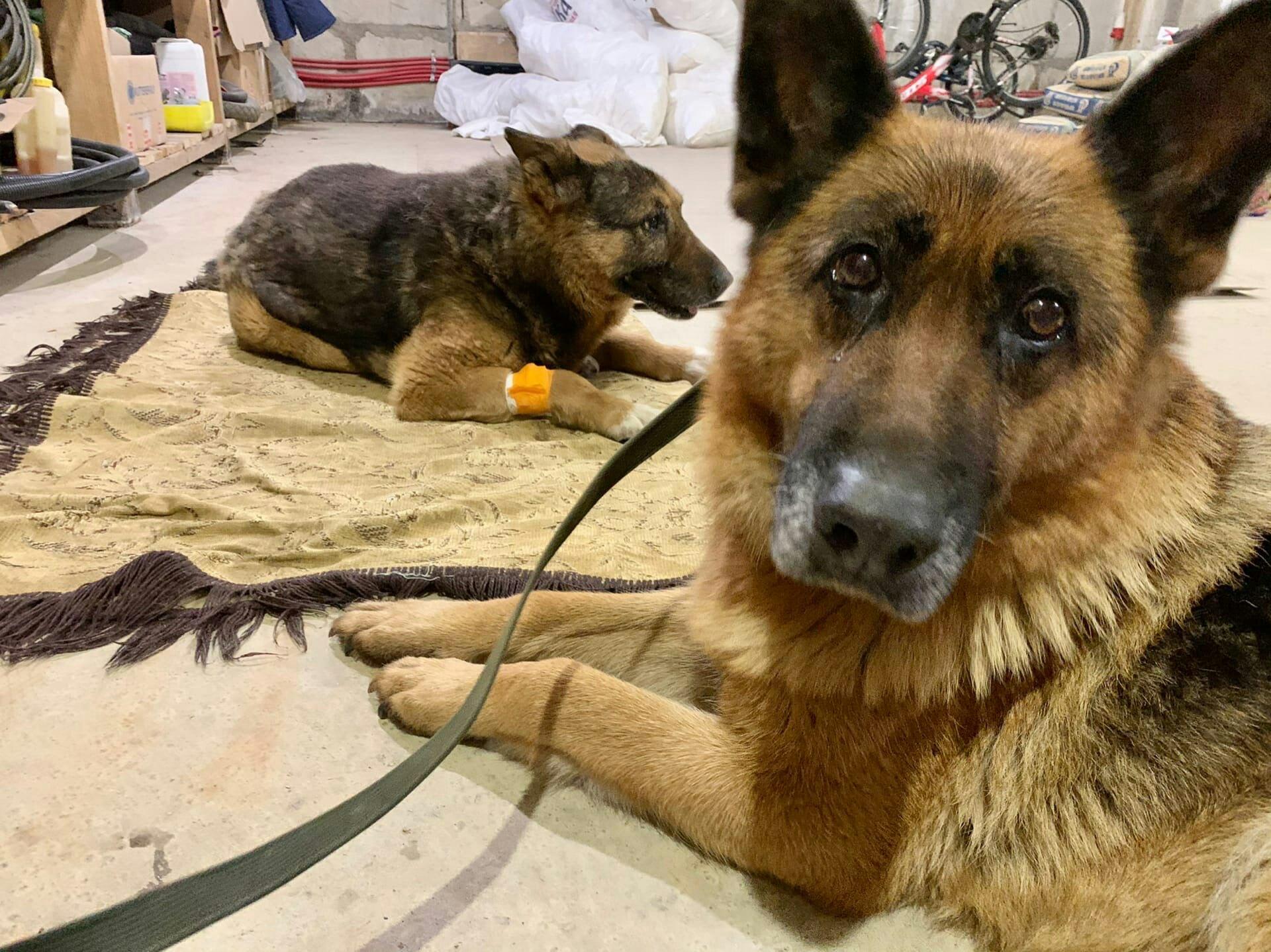 В Твери собака не оставила своего друга в беде