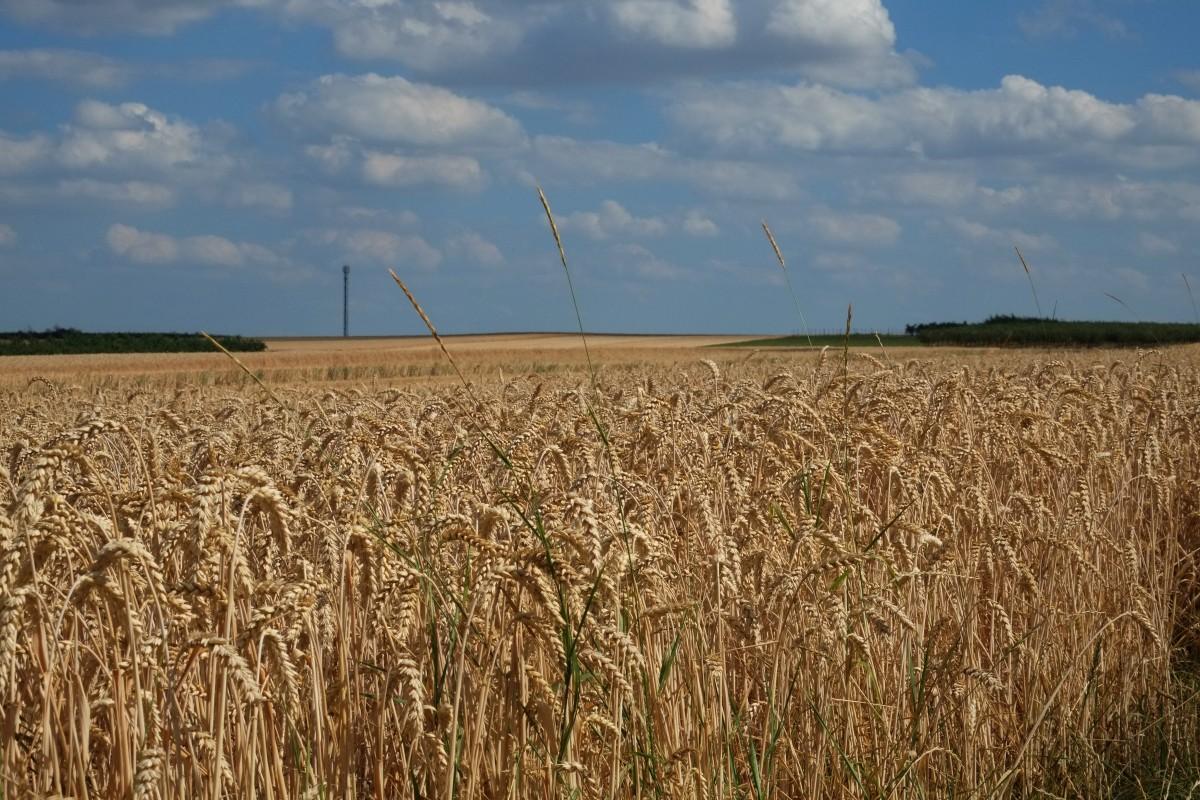 В Тверской области введена новая мера поддержки для сельхозпроизводителей