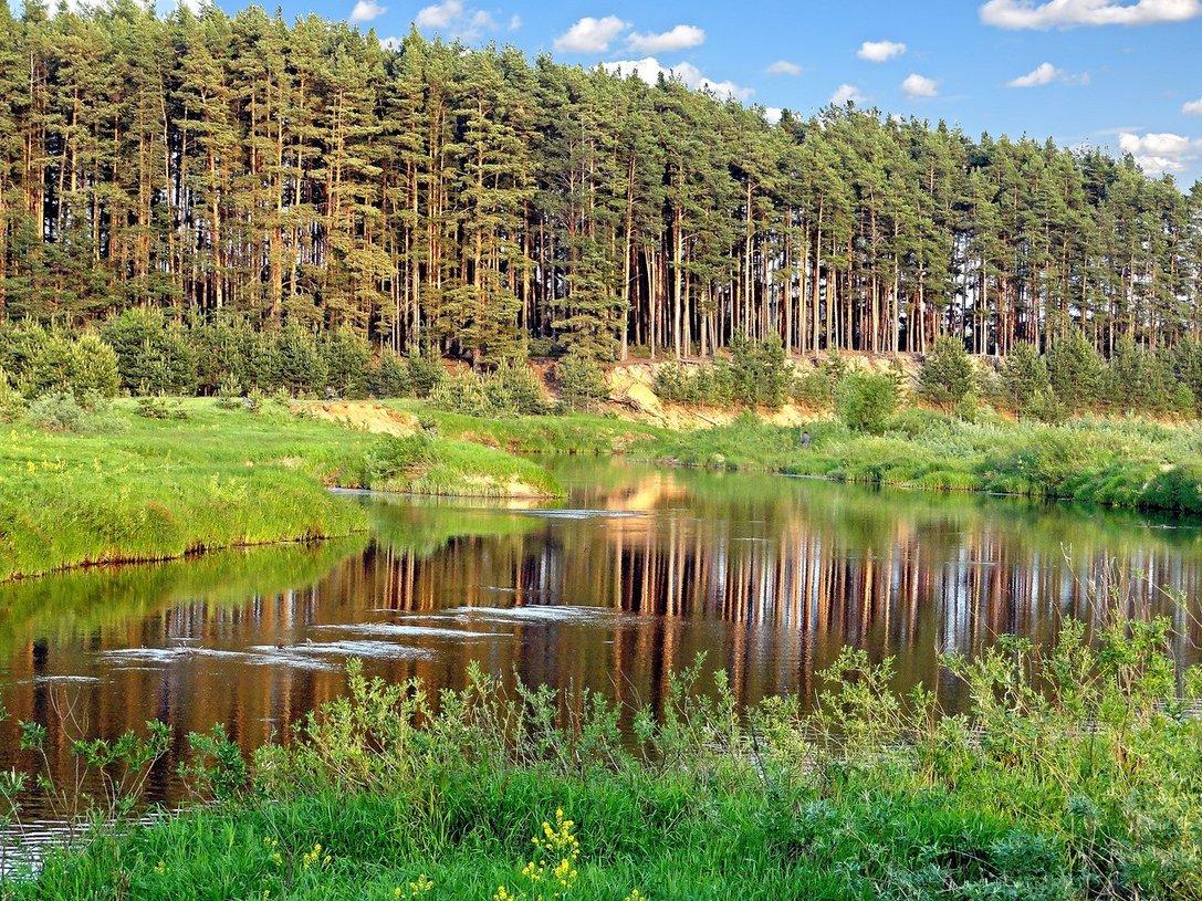 Лесной фонд в Рамешковском районе Тверской области увеличен на 580 га