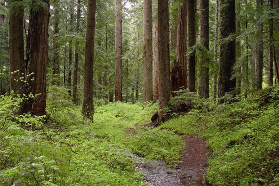 Житель Тверской области ходил в лес за урожаем, но не грибов и ягод