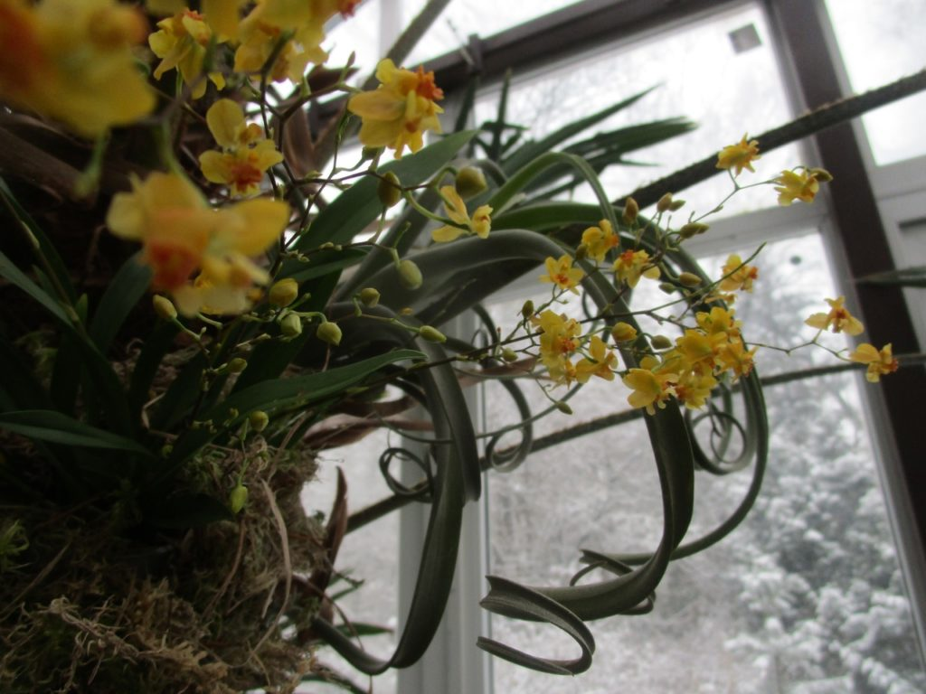 1 января в Твери откроется выставка орхидей