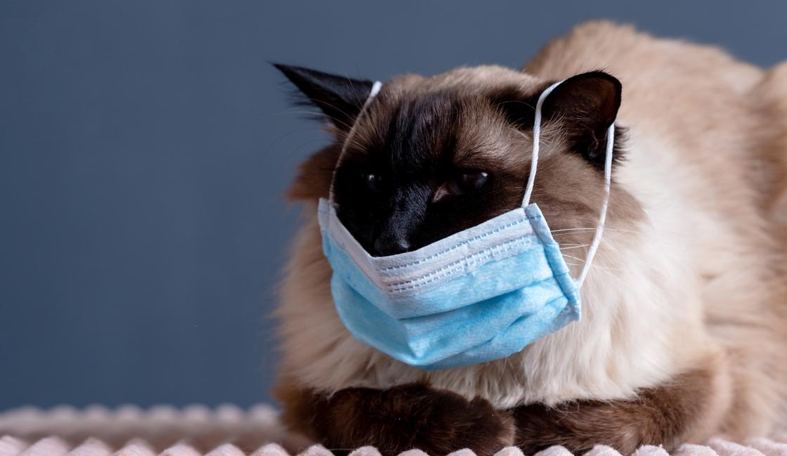 Тверитянам предложат вакцинировать домашних любимцев от коронавируса