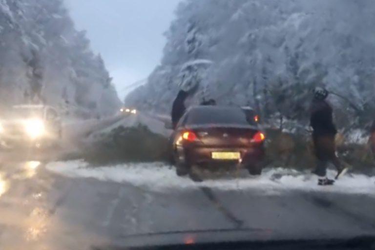 В Тверской области заснеженная ель упала на автомобиль