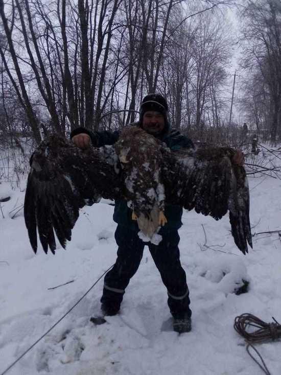 В Тверской области обнаружили мертвого краснокнижного орлана