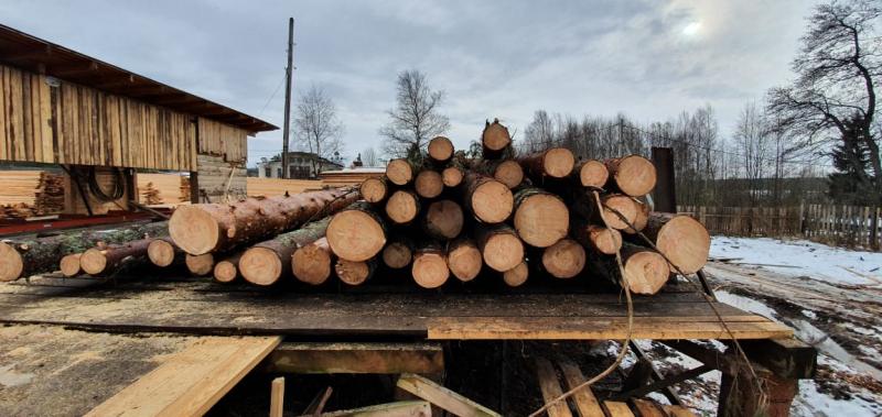 В Тверской области черный лесоруб нарубил деревьев на 6 миллионов рублей