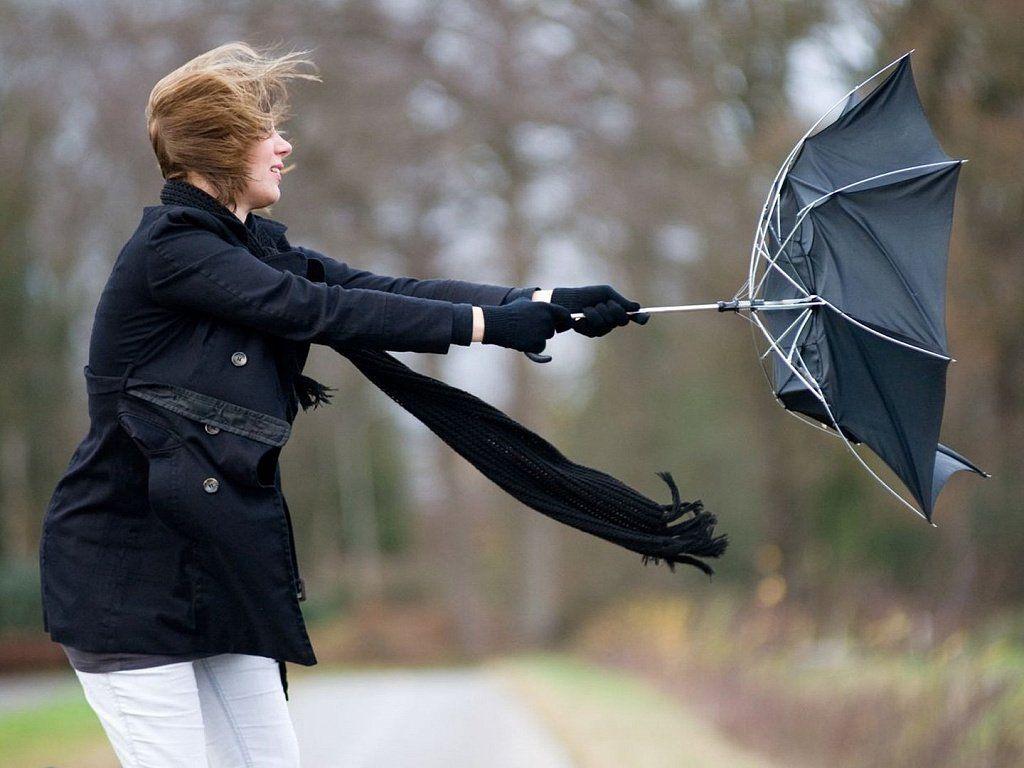МЧС по Тверской области предупреждает о сильном ветре