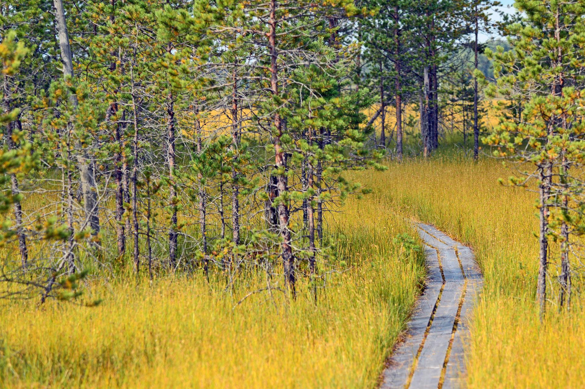 В 2021 году Центрально-лесной государственный природный заповедник в Тверской области отметит 90-летие