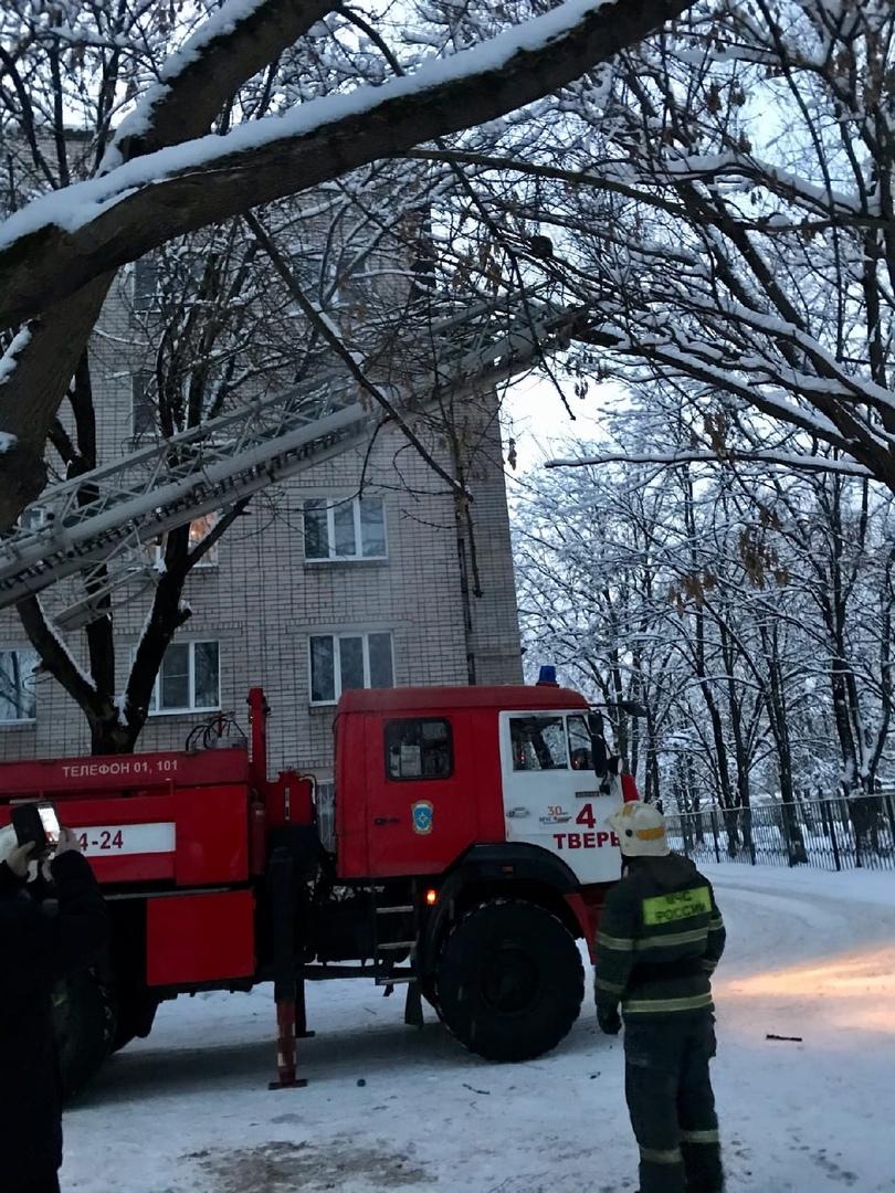В Твери спасли замерзающего кота, двое суток просидевшего на дереве