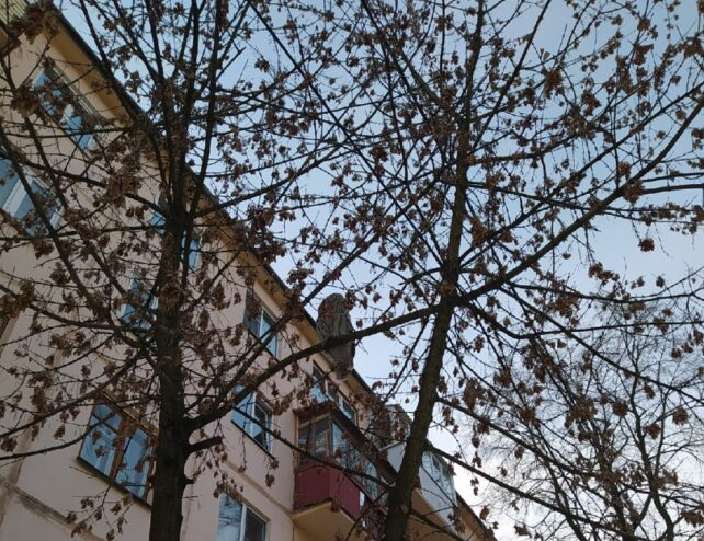 На одном из деревьев Твери заметили редкого гостя-сову