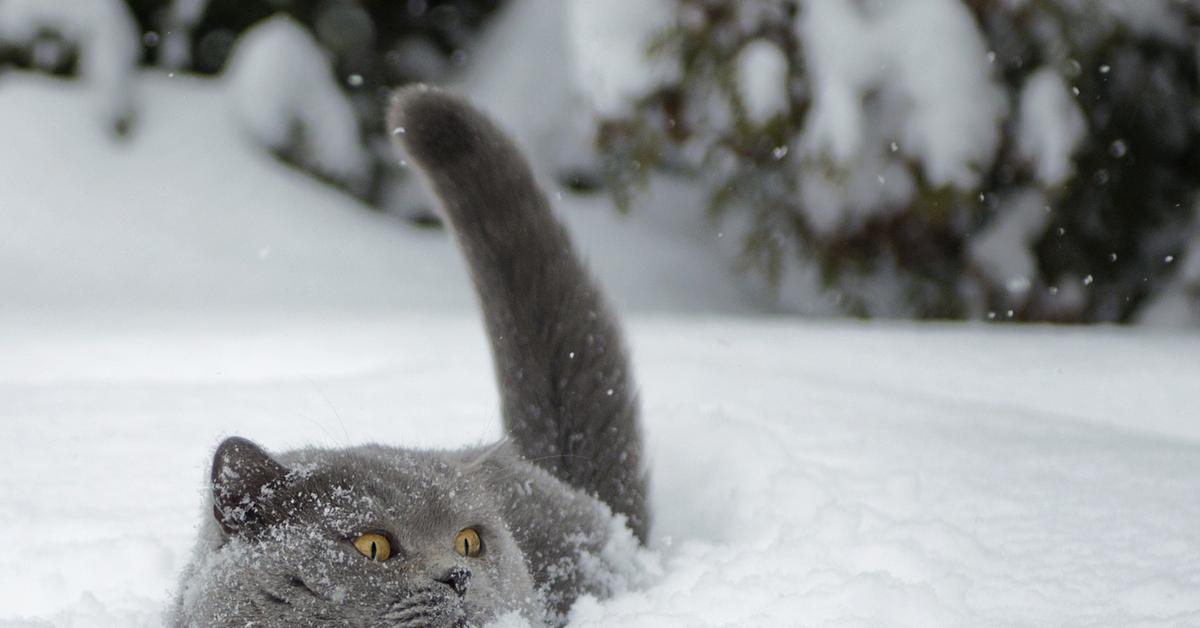 Рождественские морозы ждут жителей Тверской области