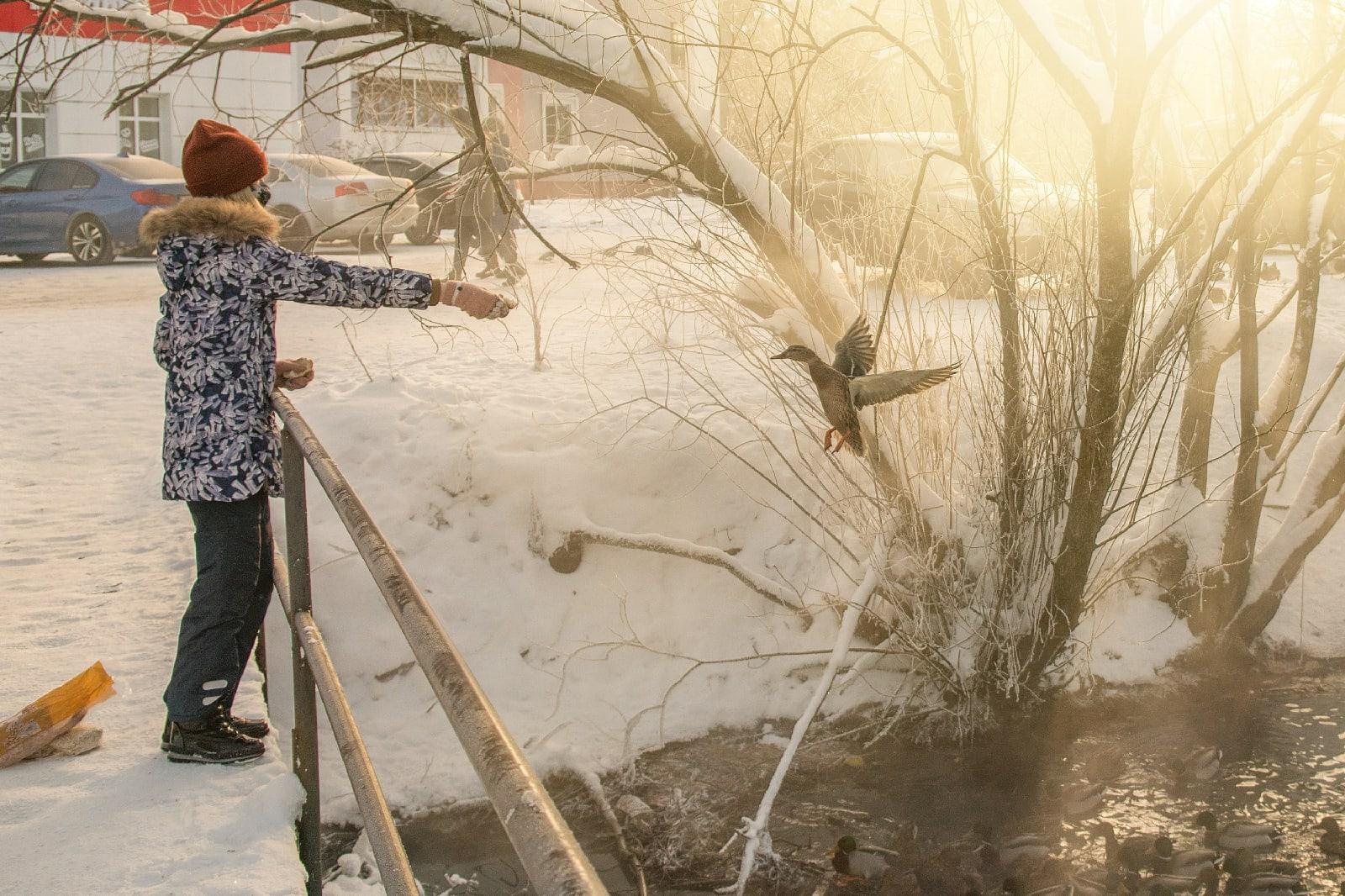 В Тверской области за неделю пересчитали уточек