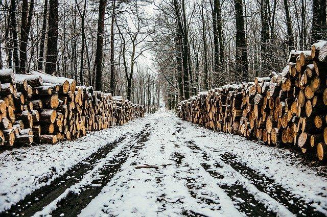 Коррупционное дело о продаже леса раскрыли в Тверской области
