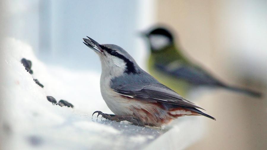 Юных жителей Ржева призывают покормить птиц зимой