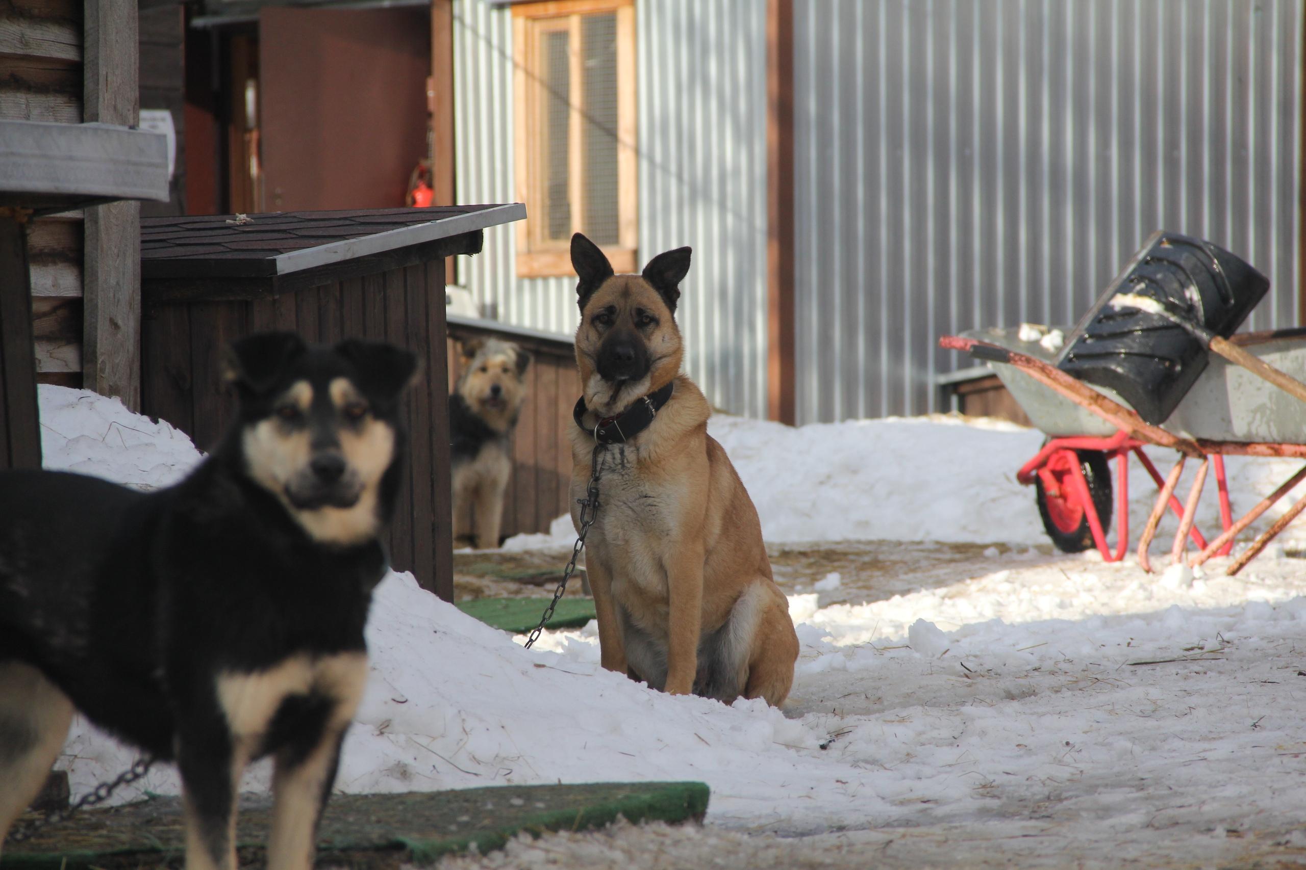 Тверские волонтеры оказывают регулярную помощь приюту бездомных животных