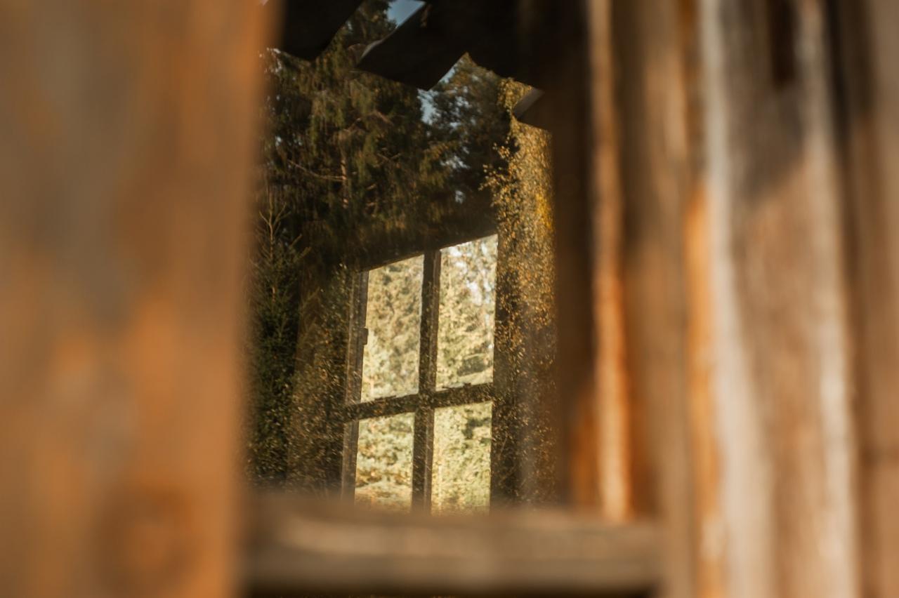 Красота в деталях: тверской фотограф запечатлел золотую осень