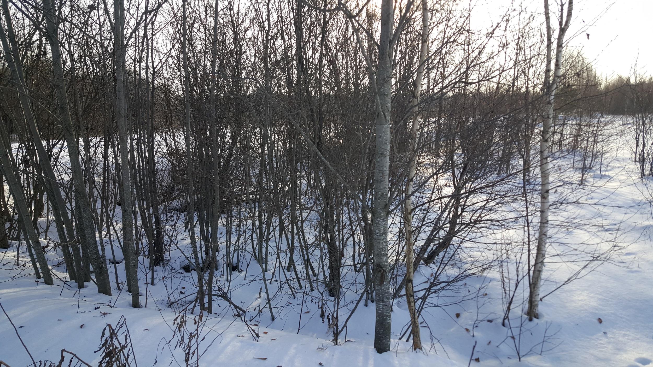 В Калининском районе собственник не устранил зарастание шести гектаров сельскохозяйственных угодий