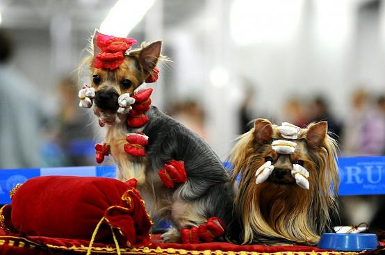 Чемпионов среди собак выберут в Твери