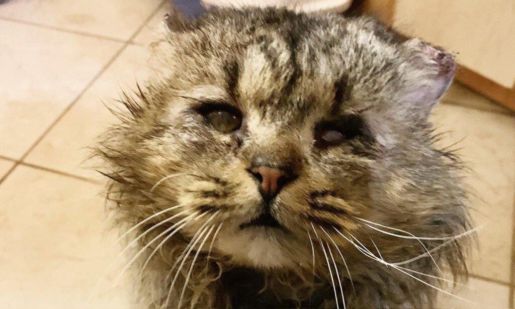 Слепой обмороженный кот замерзал в одном из тверских сугробов