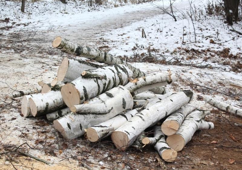 В Тверской области мужчина незаконно спилил деревья на 457 тысяч рублей