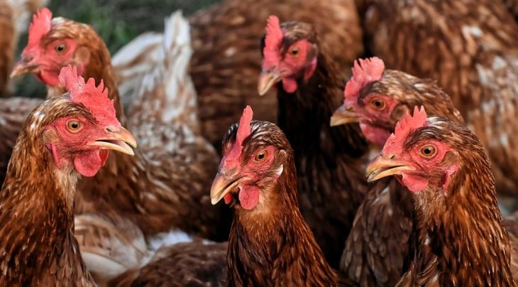 В Тверской области птицевод нарушил ветеринарные правила