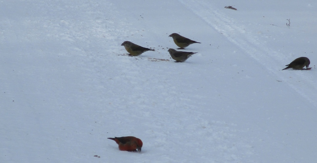 В Андреаполе невидимые птицы попали в объектив